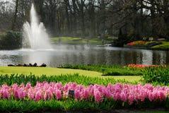όμορφος κήπος λουλου&delta Στοκ Εικόνα