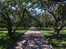 Όμορφος κήπος μήλων Στοκ φωτογραφίες με δικαίωμα ελεύθερης χρήσης