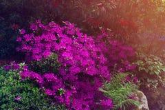 Όμορφος κήπος με τα ανθίζοντας δέντρα κατά τη διάρκεια του χρόνου άνοιξη στοκ φωτογραφίες με δικαίωμα ελεύθερης χρήσης