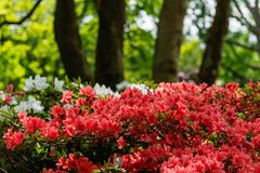 Όμορφος κήπος με τα ανθίζοντας δέντρα κατά τη διάρκεια του χρόνου άνοιξη στοκ εικόνες με δικαίωμα ελεύθερης χρήσης