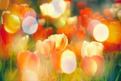 Όμορφος κήπος με την εκλεκτική εστίαση στις ζωηρόχρωμες τουλίπες Στοκ Φωτογραφίες
