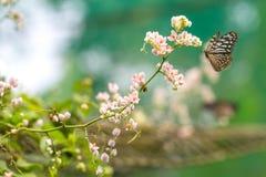 Όμορφος κήπος με το μπλε υαλώδες πέταγμα τιγρών Στοκ Εικόνες