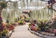Όμορφος κήπος με το φρέσκο ζωηρόχρωμο λουλούδι στο θερμοκήπιο Στοκ Εικόνες