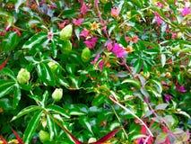 Όμορφος κήπος νεράιδων Στοκ Εικόνες