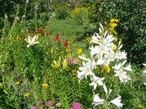 όμορφος κήπος λουλουδιών λεπίδων ανασκόπησης ζωηρόχρωμοι κρίνοι Στοκ εικόνα με δικαίωμα ελεύθερης χρήσης