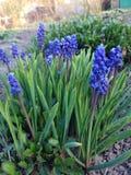όμορφος κήπος λουλουδιών λεπίδων ανασκόπησης Στοκ εικόνες με δικαίωμα ελεύθερης χρήσης