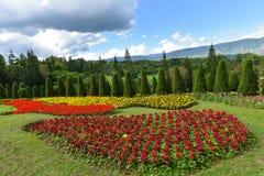 όμορφος κήπος λουλουδιών λεπίδων ανασκόπησης Στοκ Φωτογραφία