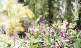 Όμορφος κήπος στην Τανζανία Στοκ εικόνα με δικαίωμα ελεύθερης χρήσης