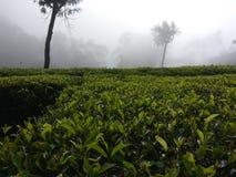 Όμορφος κήπος τσαγιού στη νότια Ινδία ooty στοκ φωτογραφίες