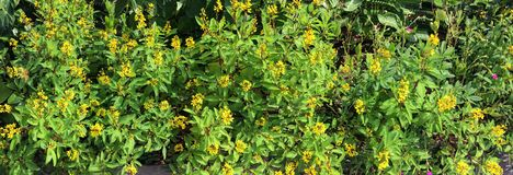 Όμορφος κήπος φυσική Ταϊλάνδη λουλουδιών υποβάθρου φωτογραφίας Στοκ φωτογραφίες με δικαίωμα ελεύθερης χρήσης