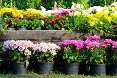 Όμορφος κήπος Στοκ φωτογραφία με δικαίωμα ελεύθερης χρήσης