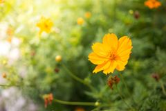 Όμορφος κίτρινος κόσμος στοκ εικόνες με δικαίωμα ελεύθερης χρήσης