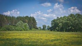 Όμορφος κίτρινος τομέας νεραγκουλών Στοκ φωτογραφία με δικαίωμα ελεύθερης χρήσης