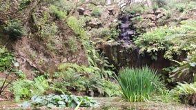 Όμορφος και ειδυλλιακός καταρράκτης που περιβάλλεται από την πολύβλαστη πράσινη βλάστηση στη φωτεινή ηλιόλουστη ημέρα Τοποθετημέν απόθεμα βίντεο