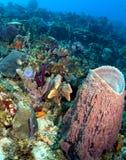 Όμορφος καραϊβικός σκόπελος Στοκ εικόνα με δικαίωμα ελεύθερης χρήσης