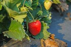 Όμορφος καταρράκτης και κόκκινα φύλλα σφενδάμου Στοκ φωτογραφία με δικαίωμα ελεύθερης χρήσης