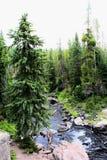 Όμορφος κολπίσκος πάρκων Yellowstone εθνικός με τους βράχους και τα πανέμορφα χρώματα βρύου και δασωδών περιοχών στοκ φωτογραφία