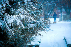 Όμορφος κομψός κλάδος κάτω από το χιόνι Στοκ εικόνες με δικαίωμα ελεύθερης χρήσης