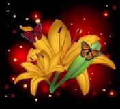 Όμορφος κρίνος λουλουδιών Στοκ Εικόνες