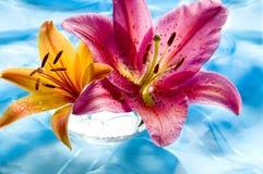 όμορφος κρίνος Στοκ φωτογραφία με δικαίωμα ελεύθερης χρήσης