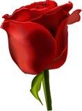 όμορφος κόκκινος αυξήθηκε διάνυσμα ελεύθερη απεικόνιση δικαιώματος