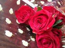 Όμορφος κόκκινος αυξήθηκε λουλούδι ως δώρο Στοκ Εικόνα