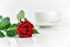 Όμορφος κόκκινος αυξήθηκε με το φλιτζάνι του καφέ το πρωί Στοκ Εικόνα
