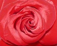 όμορφος κόκκινος αυξήθη&kapp Στοκ Φωτογραφία
