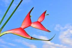Όμορφος κόκκινος εξωτικός στενός επάνω λουλουδιών στην ηλιοφάνεια στοκ εικόνα