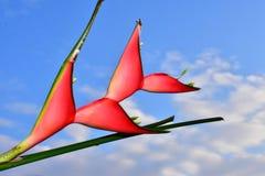 Όμορφος κόκκινος εξωτικός στενός επάνω λουλουδιών στην ηλιοφάνεια στοκ φωτογραφίες με δικαίωμα ελεύθερης χρήσης