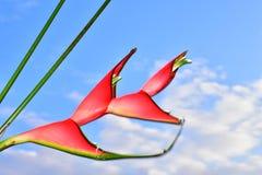 Όμορφος κόκκινος εξωτικός στενός επάνω λουλουδιών στην ηλιοφάνεια στοκ εικόνες
