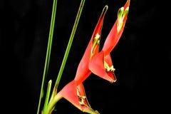 Όμορφος κόκκινος εξωτικός στενός επάνω λουλουδιών στην ηλιοφάνεια στοκ φωτογραφία με δικαίωμα ελεύθερης χρήσης