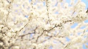 Όμορφος κλάδος δέντρων μηλιάς
