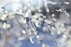 Όμορφος κλάδος με το χιόνι Στοκ Εικόνες