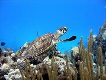 όμορφος λίγη χελώνα θάλασ& Στοκ φωτογραφίες με δικαίωμα ελεύθερης χρήσης