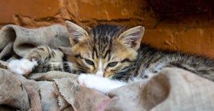 Όμορφος λίγο γατάκι κοντά στον τοίχο Στοκ φωτογραφία με δικαίωμα ελεύθερης χρήσης