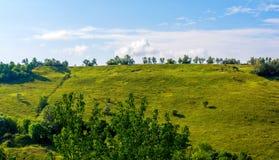 Όμορφος λόφος και πράσινη χλόη Στοκ Φωτογραφία