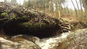 Όμορφος μικρός κολπίσκος σε ένα θαυμάσιο δάσος φιλμ μικρού μήκους