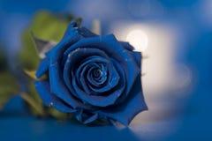 Όμορφος, μπλε, αυξήθηκε άνθος διάνυσμα σημαδιών πλέγματος αγάπης Στοκ εικόνες με δικαίωμα ελεύθερης χρήσης