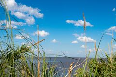 Όμορφος μπλε ουρανός με τα άσπρα σύννεφα και ορίζοντας του Ρίο de Λα Plata με τη βλάστηση στο πρώτο πλάνο Στοκ φωτογραφίες με δικαίωμα ελεύθερης χρήσης