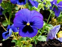 Όμορφος μπλε κήπος λουλουδιών Στοκ εικόνα με δικαίωμα ελεύθερης χρήσης