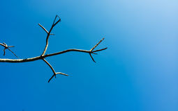 όμορφος μπλε ουρανός με ένα δέντρο Στοκ Εικόνες