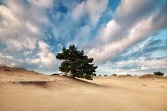 Όμορφος μπλε ουρανός με τα σύννεφα πέρα από τον αμμόλοφο άμμου Στοκ Φωτογραφίες