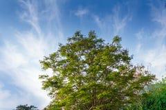 Όμορφος μπλε ουρανός στην κορυφή ενός πράσινου δέντρου Στοκ Φωτογραφία
