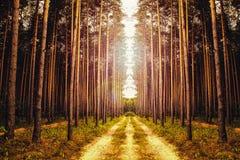 Όμορφος μυστικός δασικός στενός επάνω με την ομίχλη και το φως του ήλιου στοκ εικόνα με δικαίωμα ελεύθερης χρήσης