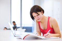 Όμορφος, νέος φοιτητής πανεπιστημίου που μελετά στη βιβλιοθήκη Στοκ Φωτογραφία