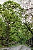 Όμορφος ξύλινος νεκρός φράκτης στο πάρκο Κάθετη φωτογραφία στοκ εικόνες