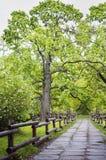 Όμορφος ξύλινος νεκρός φράκτης στο πάρκο στοκ φωτογραφίες