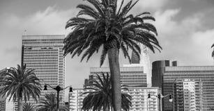 Όμορφος ορίζοντας πόλεων του Σαν Φρανσίσκο με τους φοίνικες Στοκ εικόνα με δικαίωμα ελεύθερης χρήσης