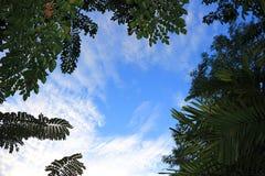 Όμορφος ουρανός στοκ εικόνα